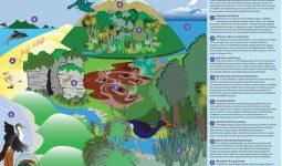 Waikato-Biodiversity-Forum-Featured-Images-59